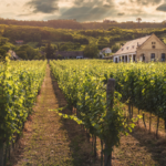 Episode 15: Terroir tourism – Getting to the roots of what makes wine so good